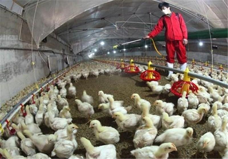 گزارش 5 مورد جدید ابتلا به آنفولانزای مرغی در چین