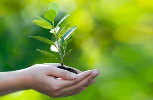 محصولات دانش بنیان حفظ نباتات تجاری سازی می گردد