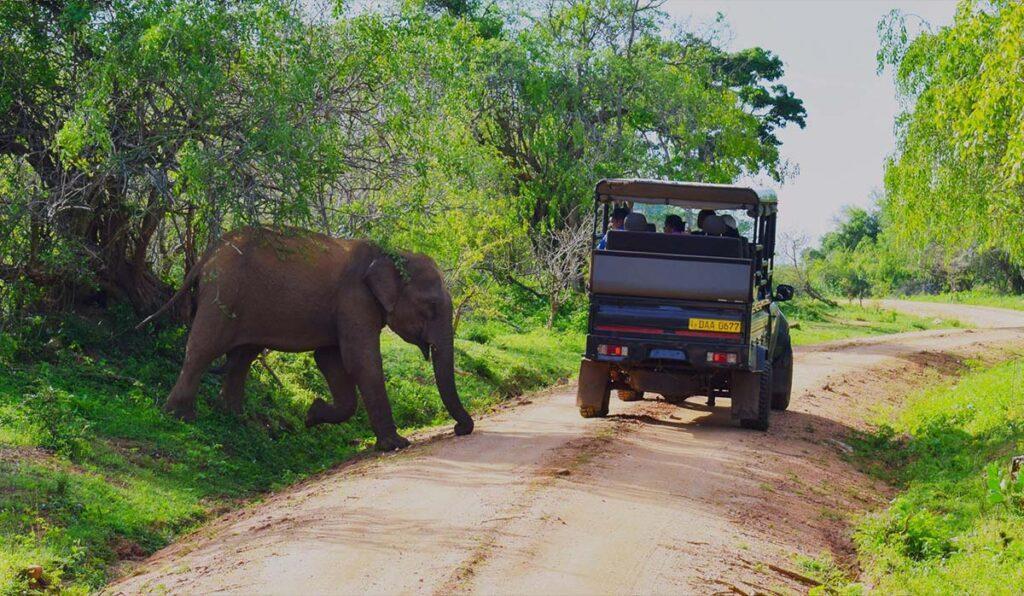 پارک های ملی سریلانکا، مکان هایی فوق العاده برای دیدن حیات وحش
