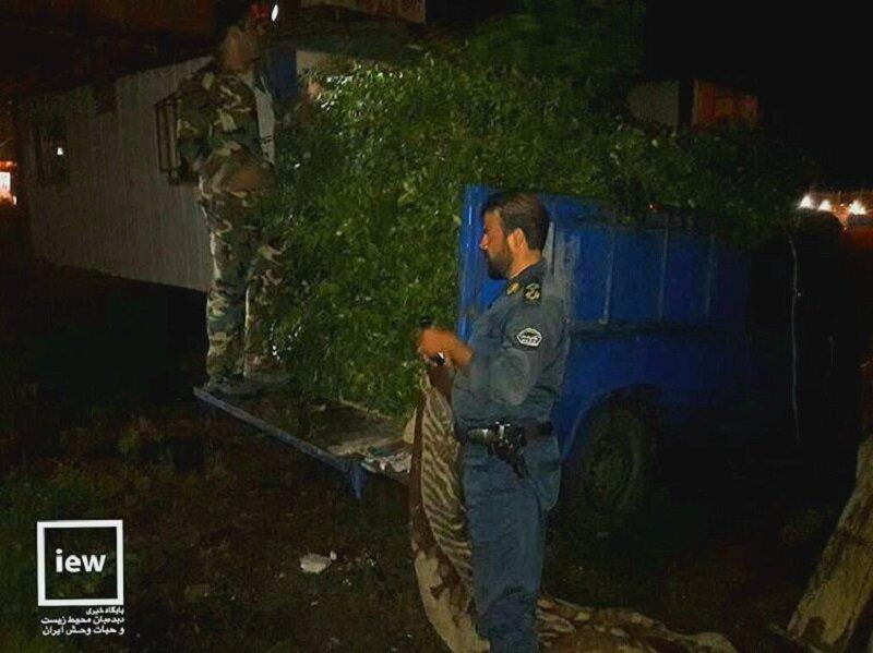 محموله قاچاق حاوی 15 هزار شاخه چلم در بندرگز کشف شد