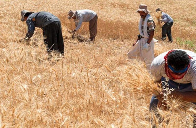 خبرنگاران 312 میلیارد تومان از مطالبه گندمکاران استان تهران پرداخت شده است