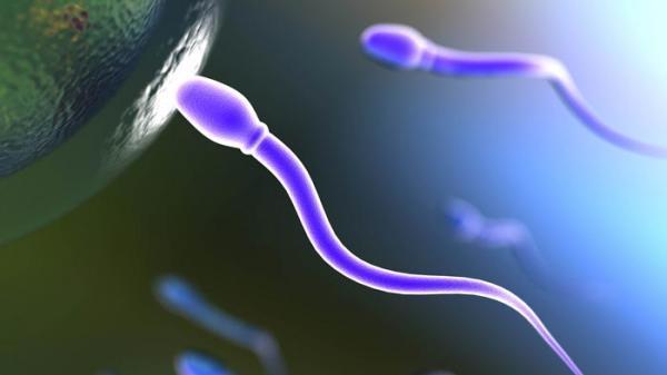تعداد اسپرم نرمال برای باروری چقدر است؟